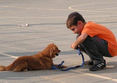 School Sa'ad – Therapeutische Honden Training