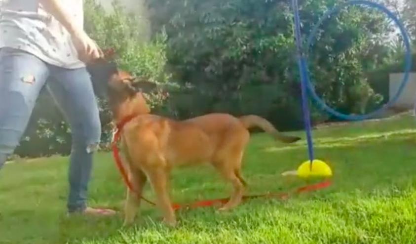 Hond op grasveld