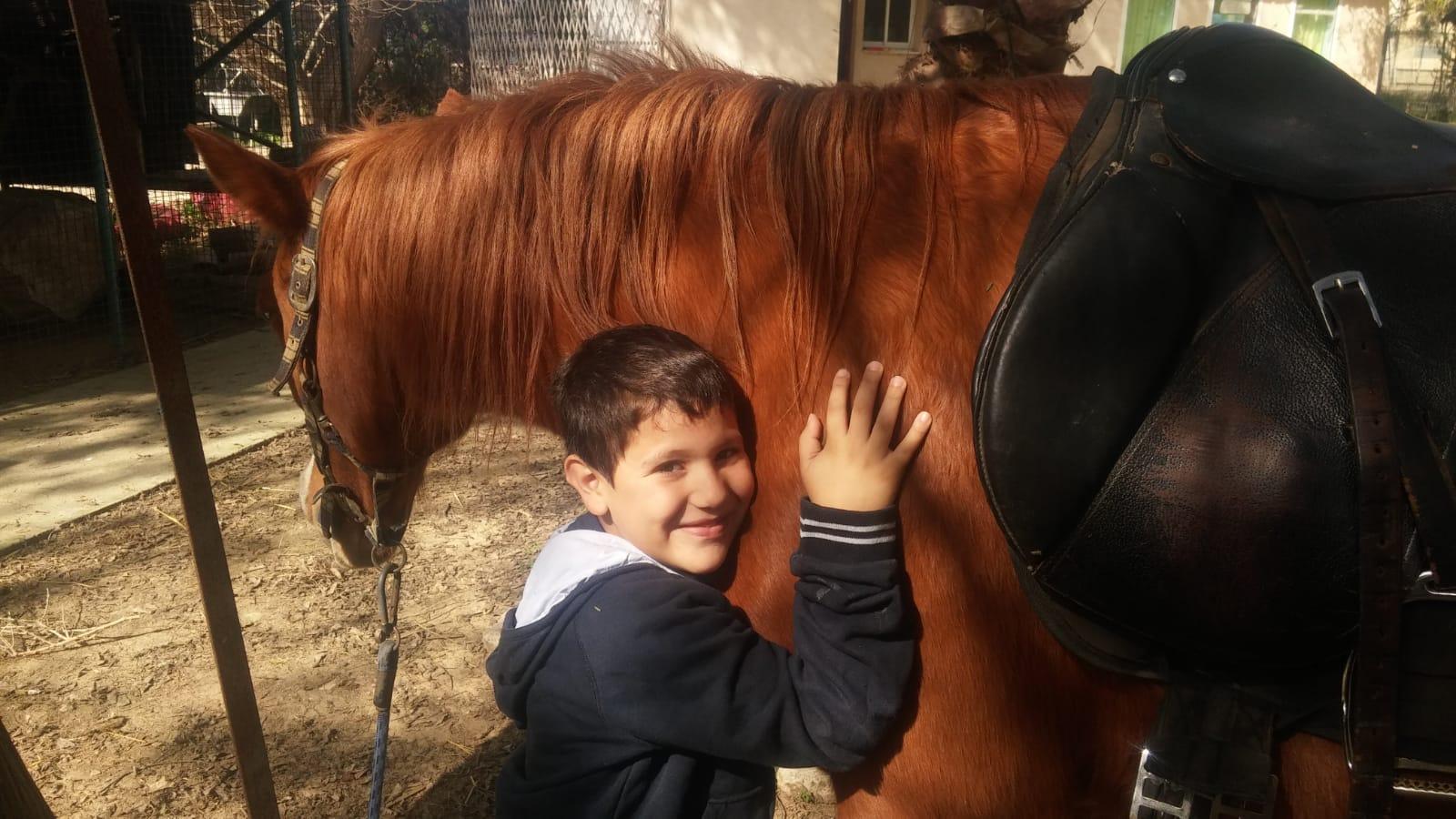 Paard met jongen